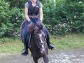 Training crosscountry paarden (11 van 185)