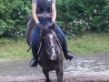 Training crosscountry paarden (12 van 185)