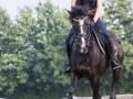 Training crosscountry paarden (14 van 185)