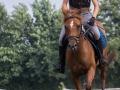 Training crosscountry paarden (15 van 185)