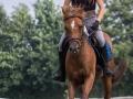 Training crosscountry paarden (16 van 185)
