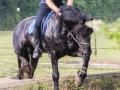 Training crosscountry paarden (17 van 185)