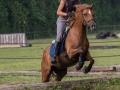 Training crosscountry paarden (18 van 185)