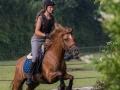 Training crosscountry paarden (19 van 185)