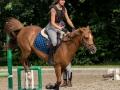 Training crosscountry paarden (2 van 185)