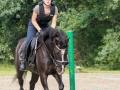 Training crosscountry paarden (3 van 185)