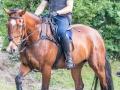 Training crosscountry paarden (6 van 185)